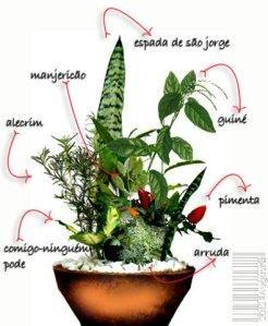 sete ervas de proteção - Pesquisa Google (com imagens) | Ervas ...