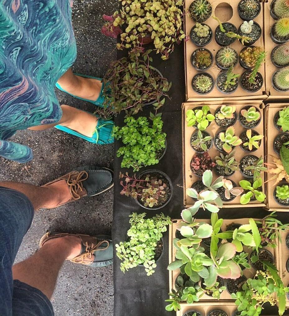 Aproveitando o domingo pra comprar mais algumas plantinhas para a coleção aqui na feira do príncipe (que já apresentamos lá no Blog!)  // #succulent #cactus #flowers #nature