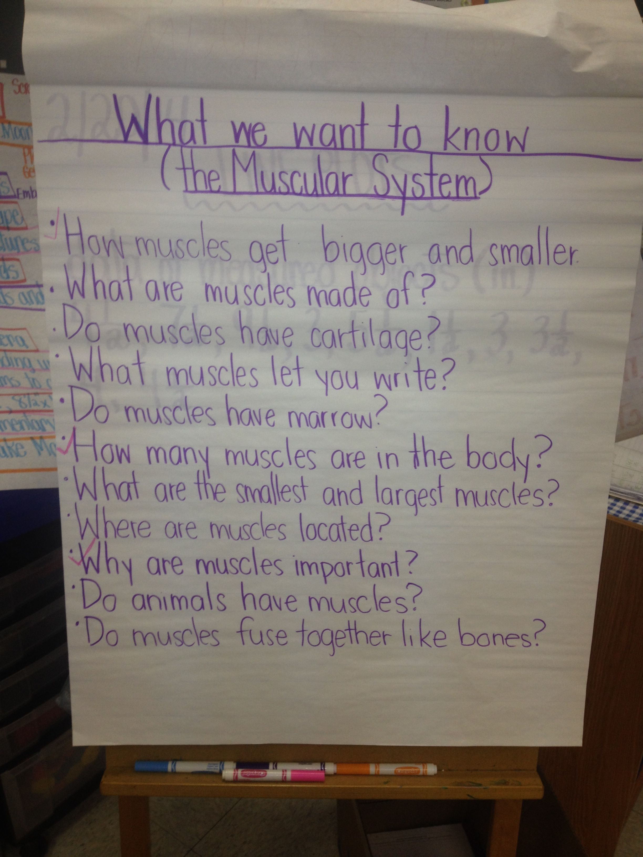 What We Want To Know About The Muscular System