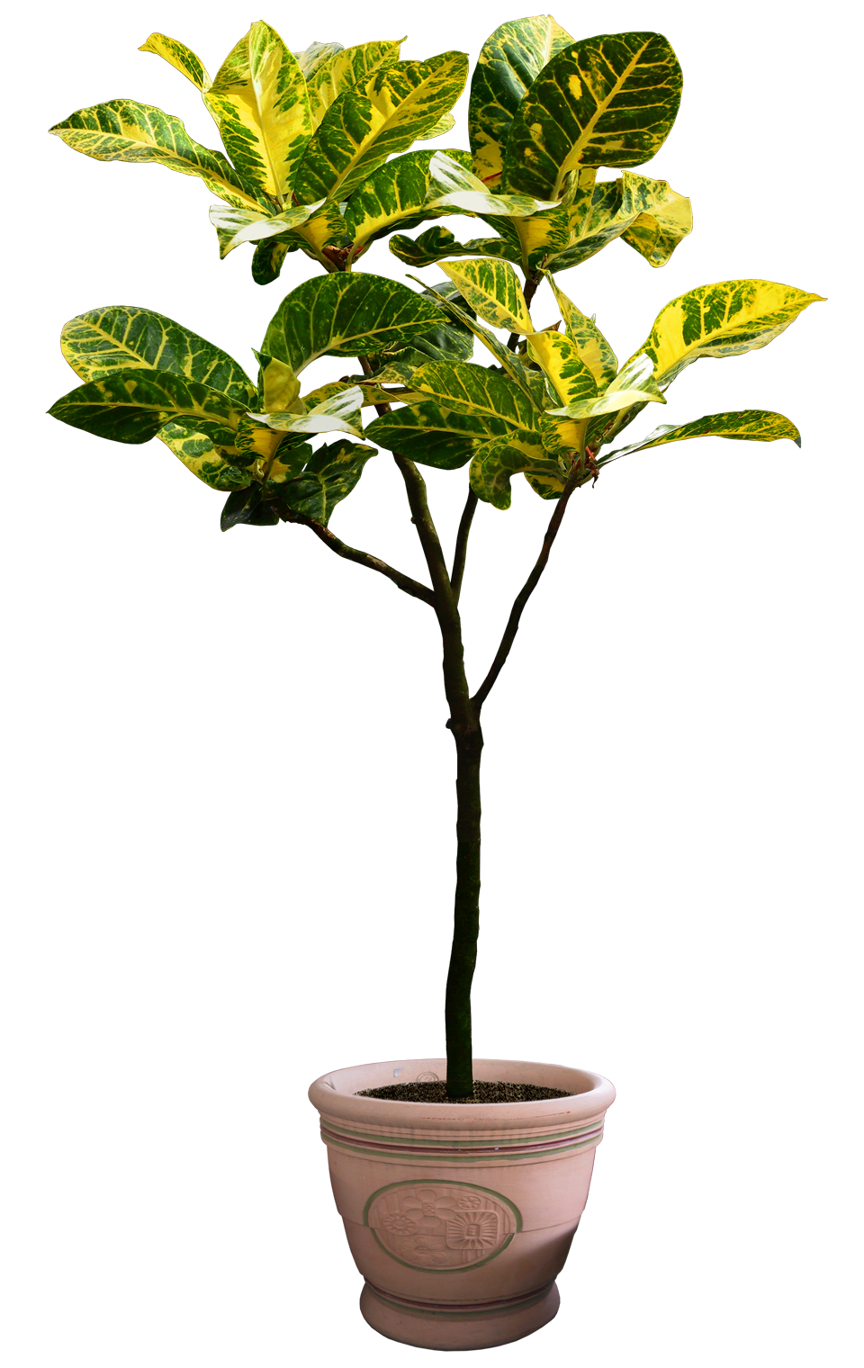 Top view plants 02 2d plant entourage for architecture - Architecture Psd Png Cutout Tree Psdfoliage Plantsgrass