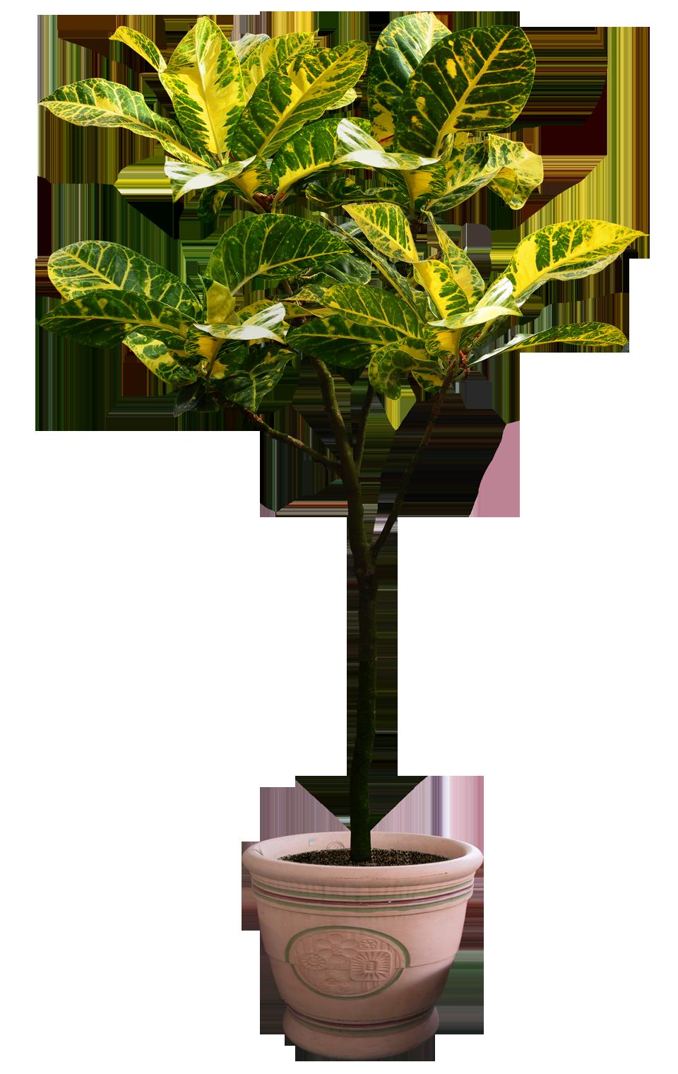 Psd Png Cutout Tanaman Tanaman Pot Kebun