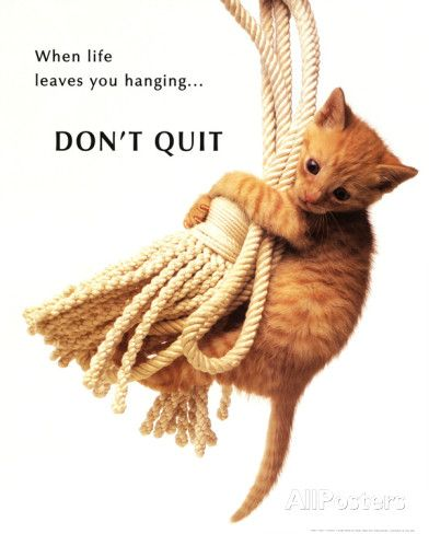 Don T Quit Kitten On Rope Hang In There Cat Cat Posters Animal