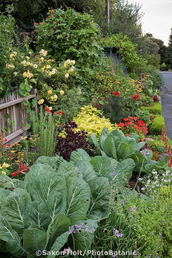 Streetside ornamental vegetable garden border; Rosalind Creasy\'s ...