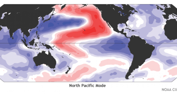 """Two new studies have just hit about the """"warm blob"""" in the northeast Pacific ocean — a 2 degree C or more temperature anomaly that began in the winter of 2013-2014 in the Gulf of Alaska and later expanded."""