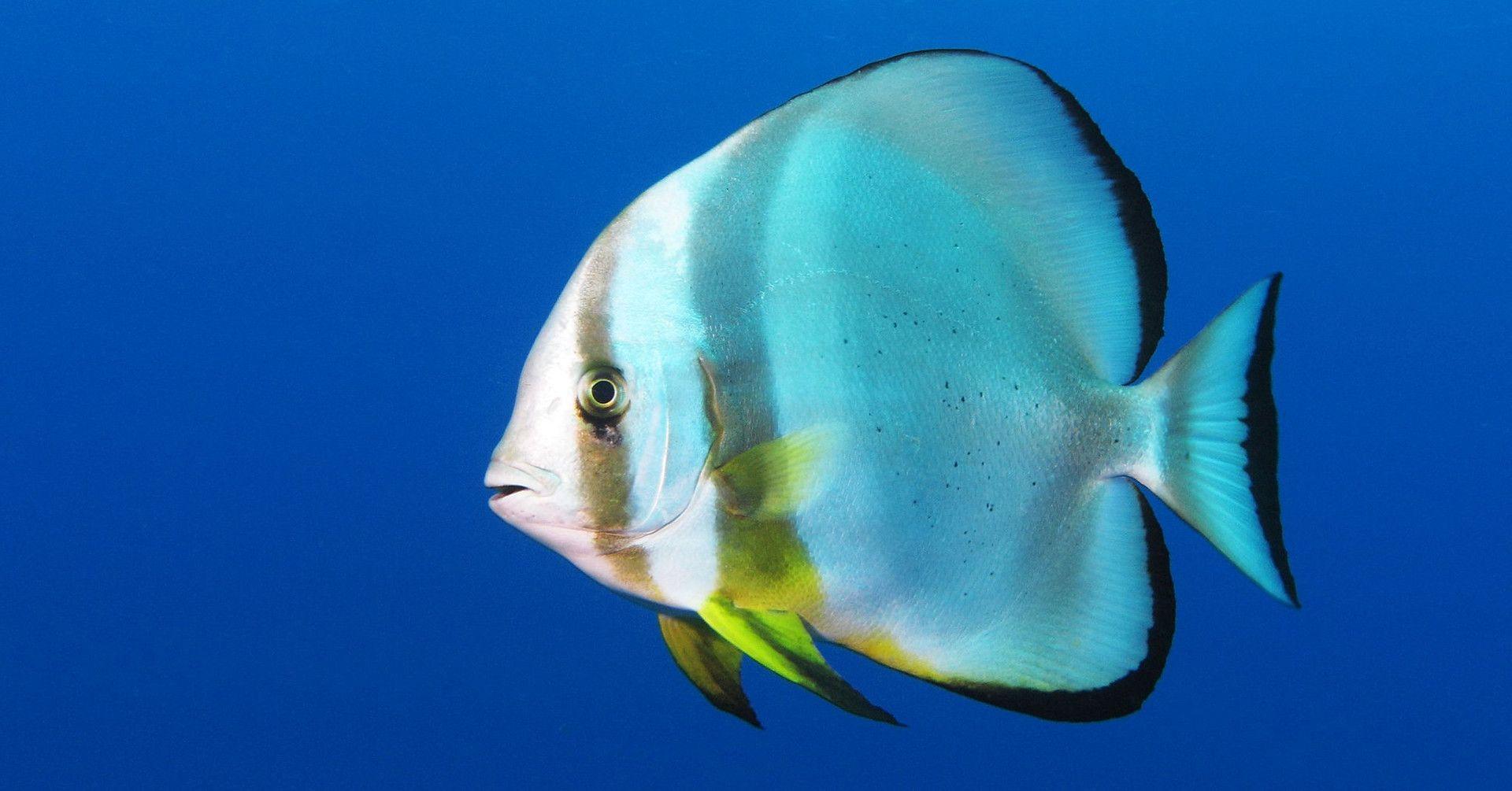 Tutkijat tunnistivat useita kalakuoroja. Myös Suomen vesillä uiskentelee äänteleviä kaloja.