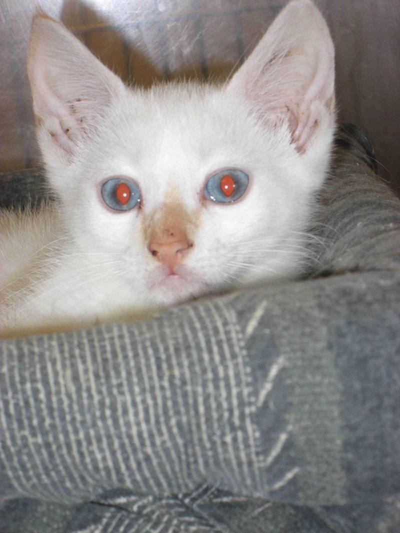 Adopt Cat 3 June 25 K On Petfinder Cat Adoption Cats Animals