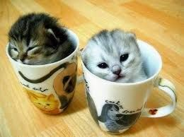 Resultado de imagem para funny cats