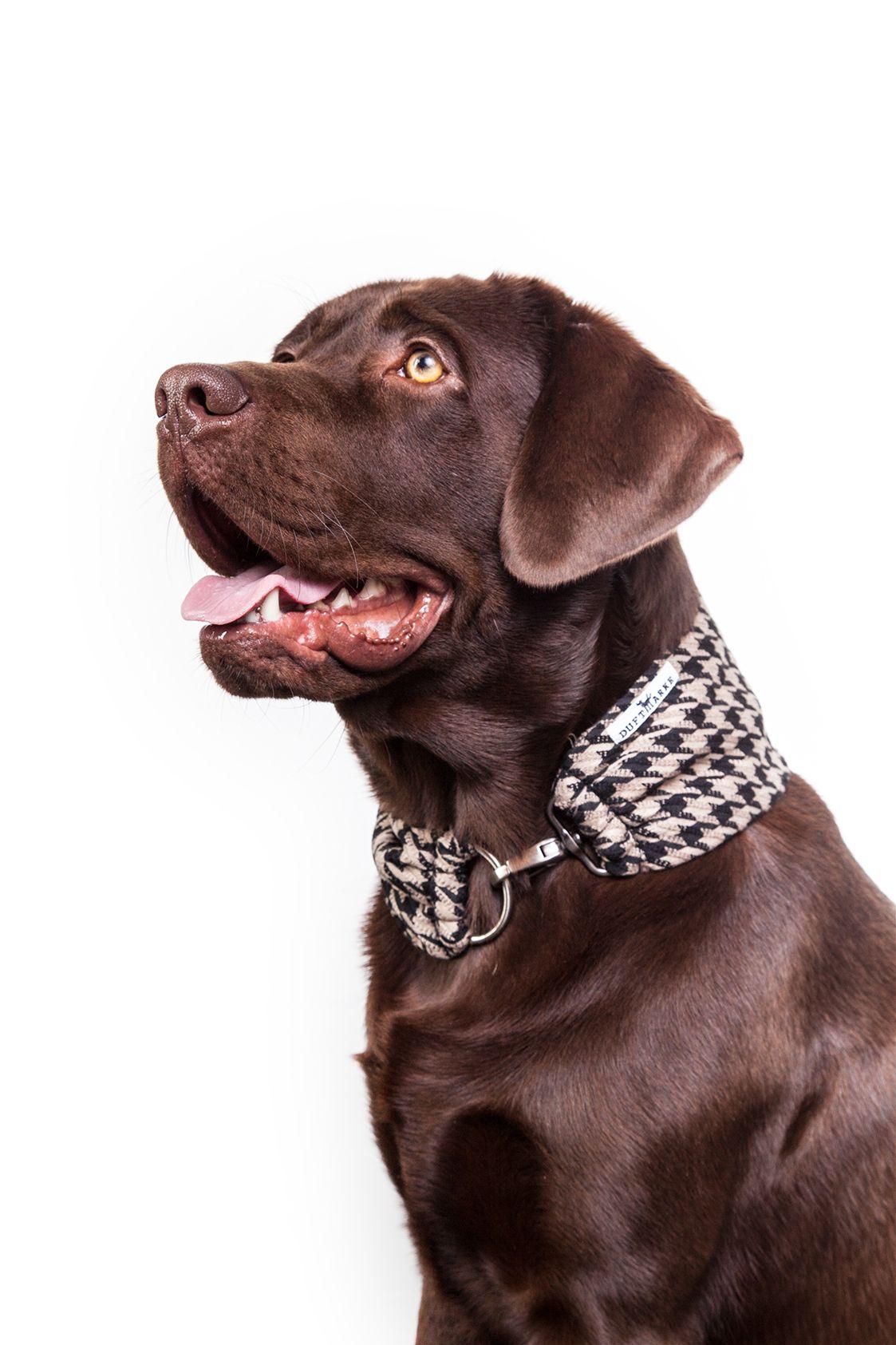 DoggyScarfs sind eine Mischung aus Schal, Tuch und Halsband. Sie ...