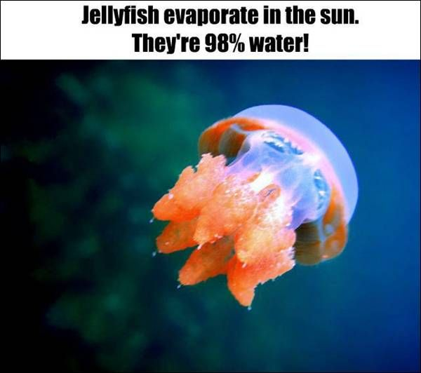 Fact about Jellyfish | Wildlife - Marine | Pinterest | Facts about ...