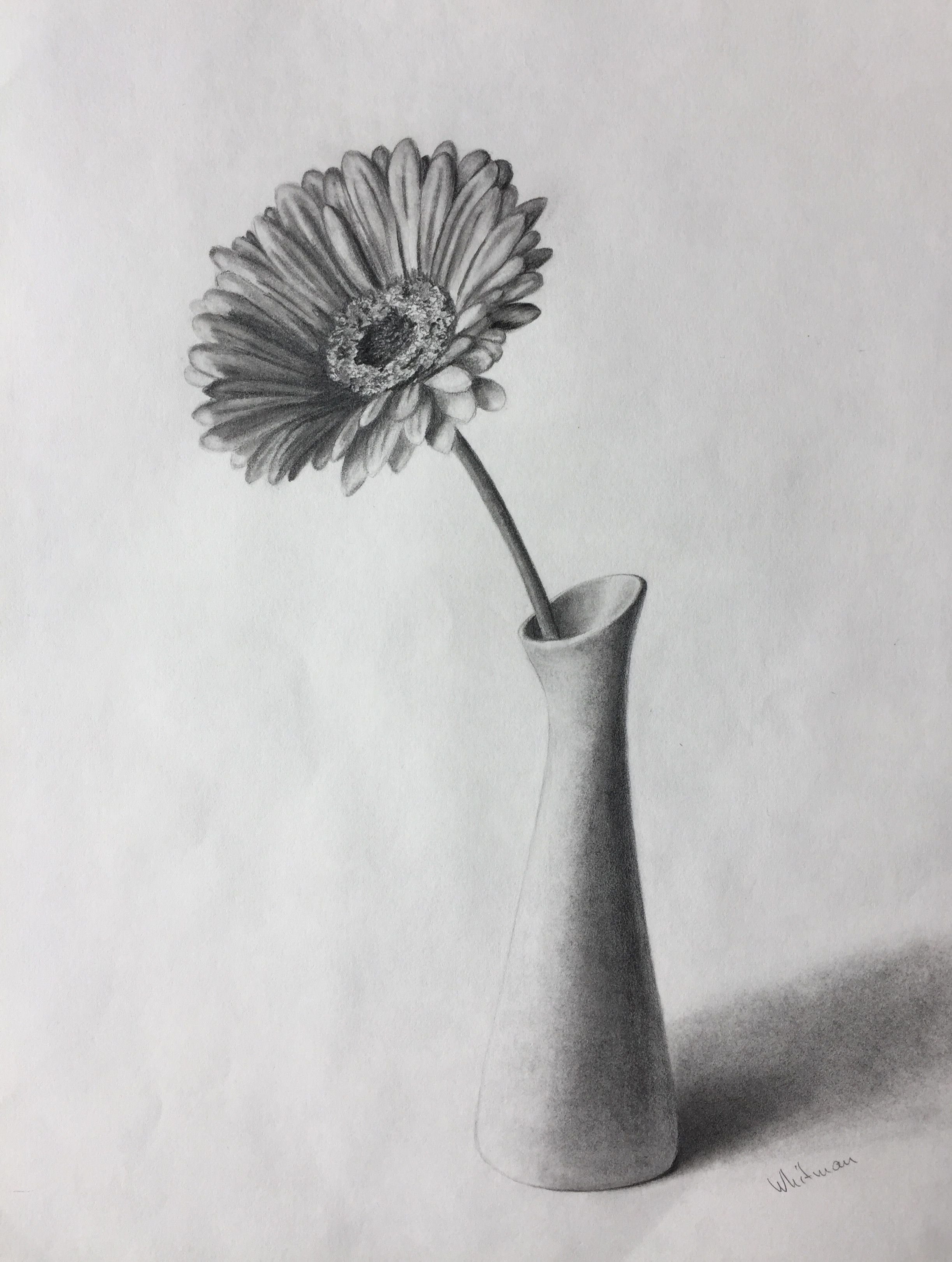 80 gerbera flower in a vase still life sketch original art 80 gerbera flower in a vase still life sketch original art graphite pencil reviewsmspy