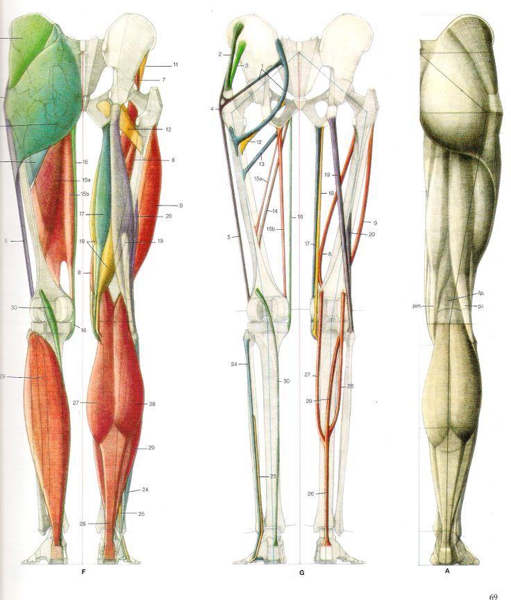 t3m2qdPm3jU.jpg (736×864) | Human Leg|Foot Anatomy | Pinterest