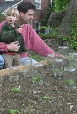 Canning jars as tiny greenhouses. Used that idea this year. Worked great