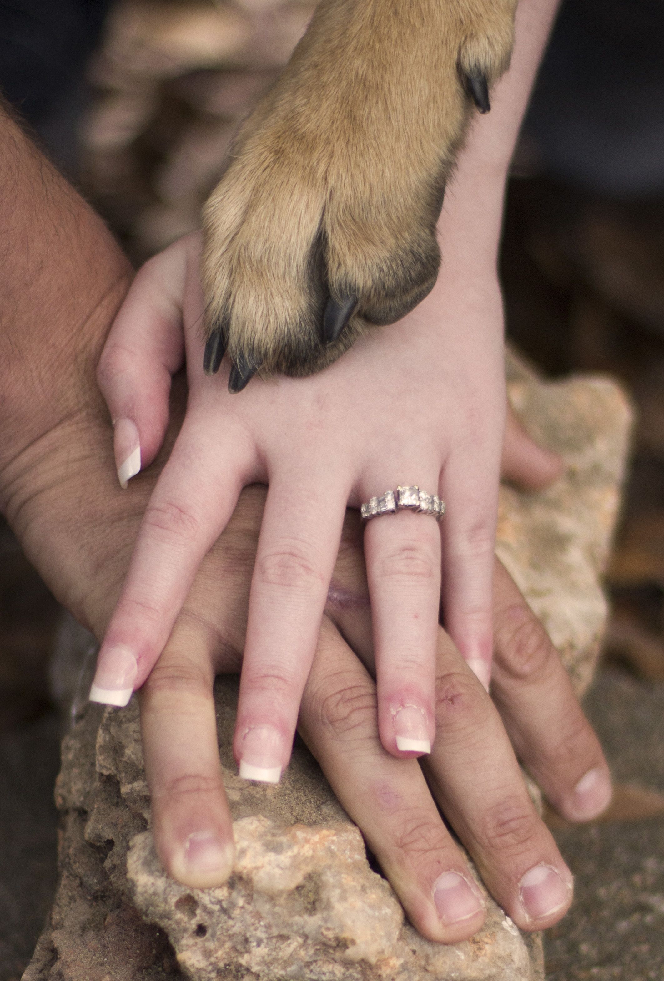My daughter\'s engagement picture where her German Shepherd approves ...