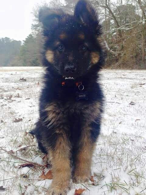 3 month old cutie