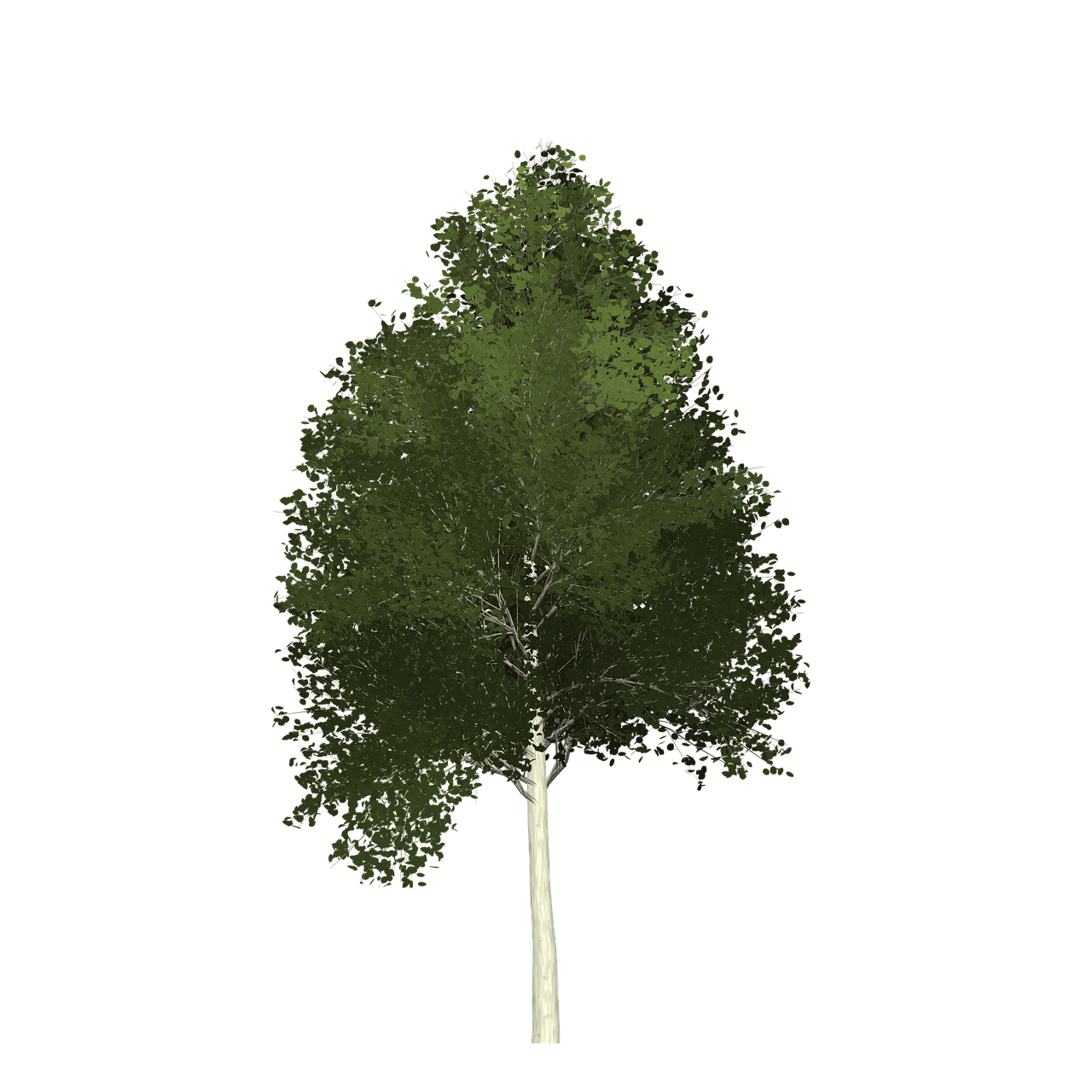 Forest Aspen Tree Painted Tree Nature Green Image Forest Aspen Tree Painted Tree Nature Green Image Aspen Trees Painting Nature Friendly Nature