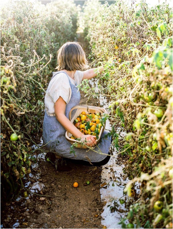 on the farm — Lissa Ryan Photography