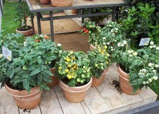 Tuinieren Op Balkon : Ein balkon gemüsegarten für die selbstversorgung