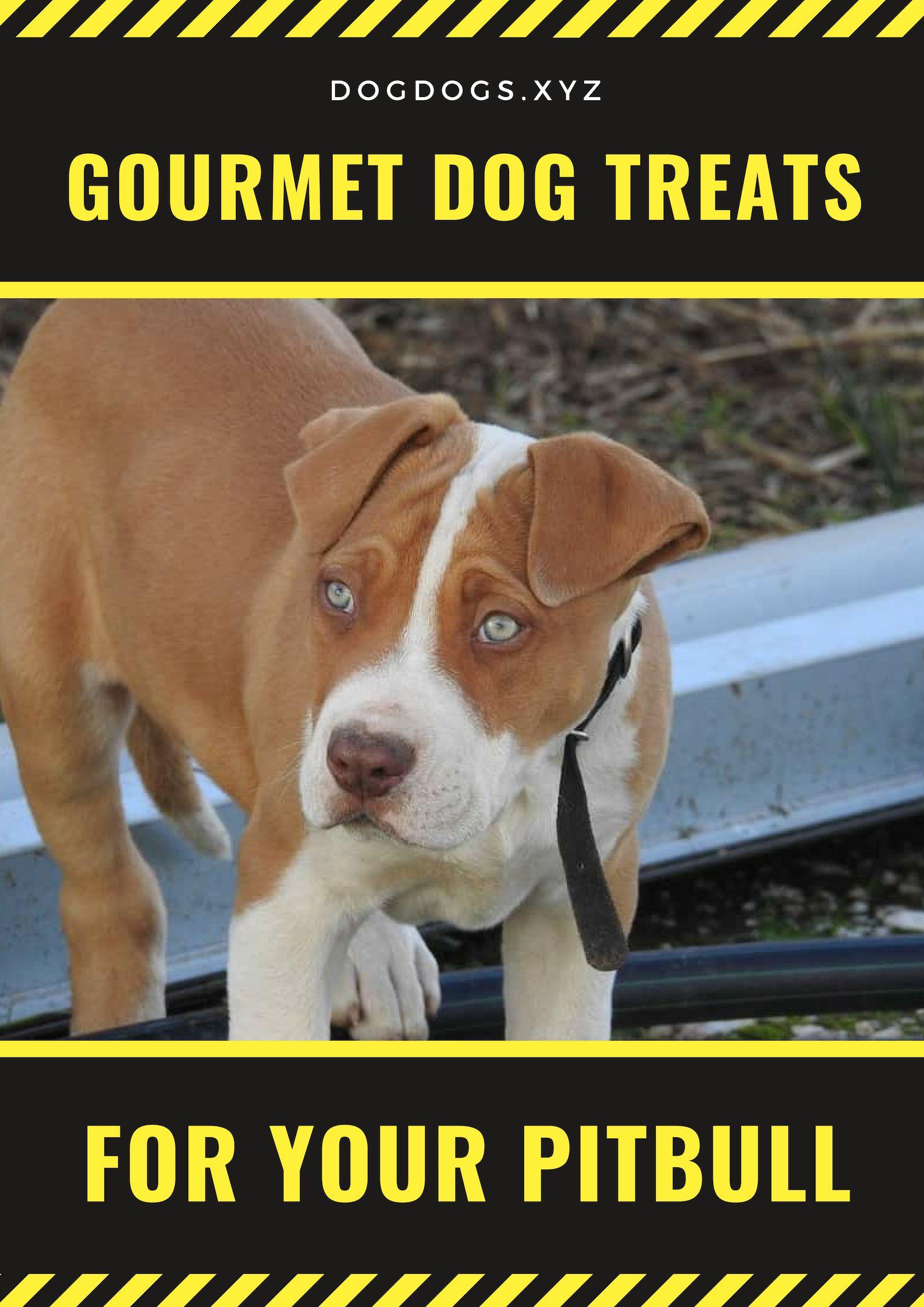 Gourmet Dog Treats For Your Pitbull My Lover Gourmet Dog