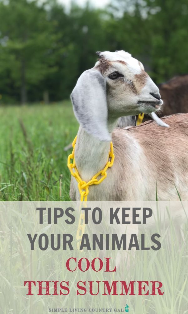 Tips on how to keep your animals cool in the heat. in 2020 ...
