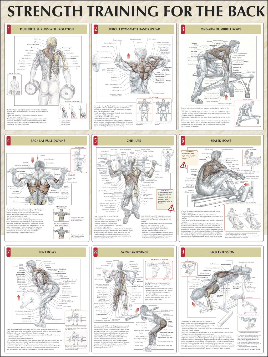 Strength training for the back chart fitness pinterest strength training for the back chart geenschuldenfo Images