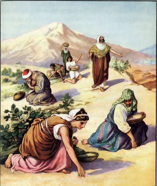 Manna From Heaven | Bible art, Bible pictures, Bible illustrations