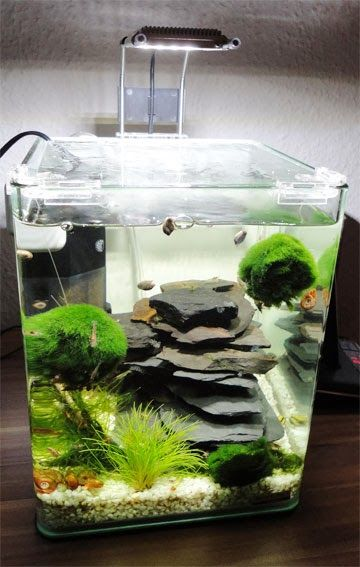 bildergebnis f r aquascaping in dennerle nano cube. Black Bedroom Furniture Sets. Home Design Ideas