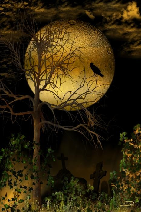 Crows Picking Over Prairie Burn On >> Crow Drawings Bing Images Ravens And Crows Crows Drawing Moon
