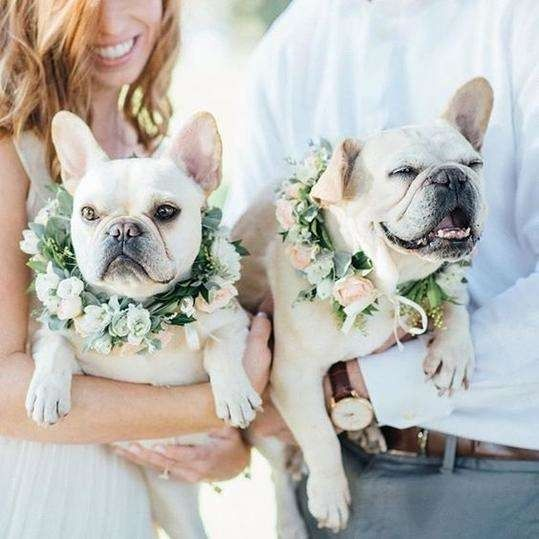 9 Dapper Ways To Dress Your Dog For Your Wedding Day Dog Wedding Outfits Dog Wedding French Bulldog Wedding