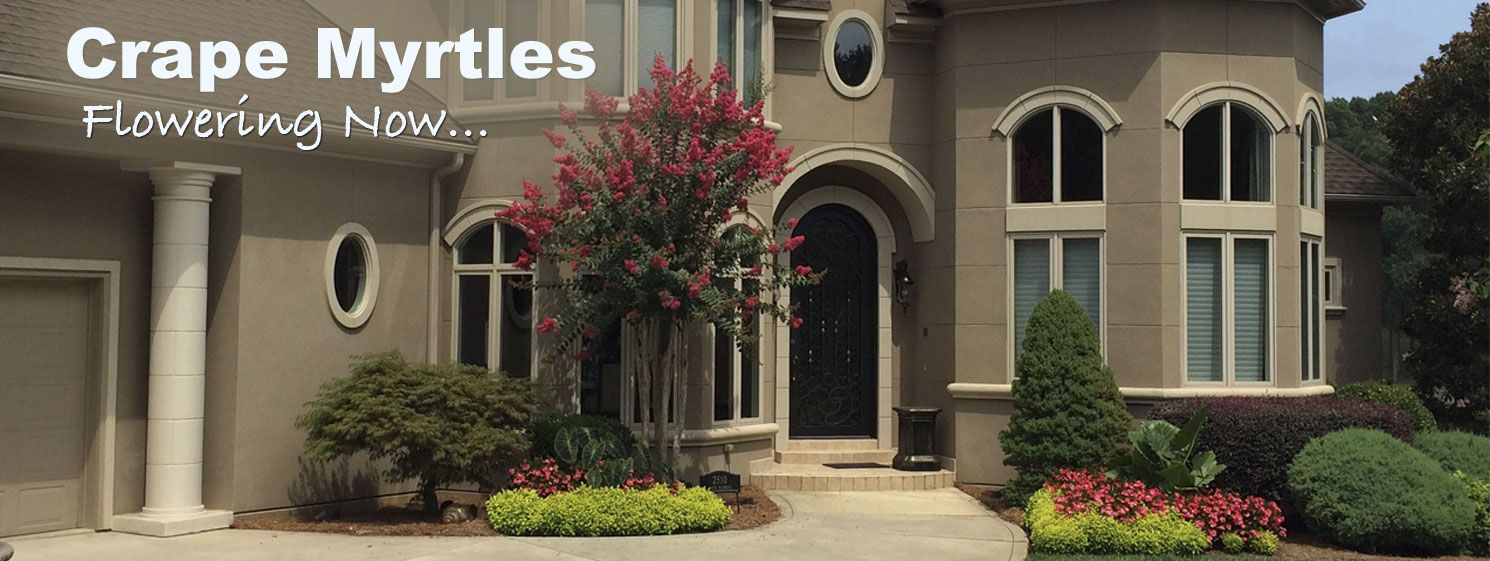 Sale on Crape Myrtles