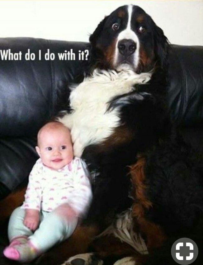 Dog And Baby Baby Animals Funny Funny Animal Pictures Funny Animals