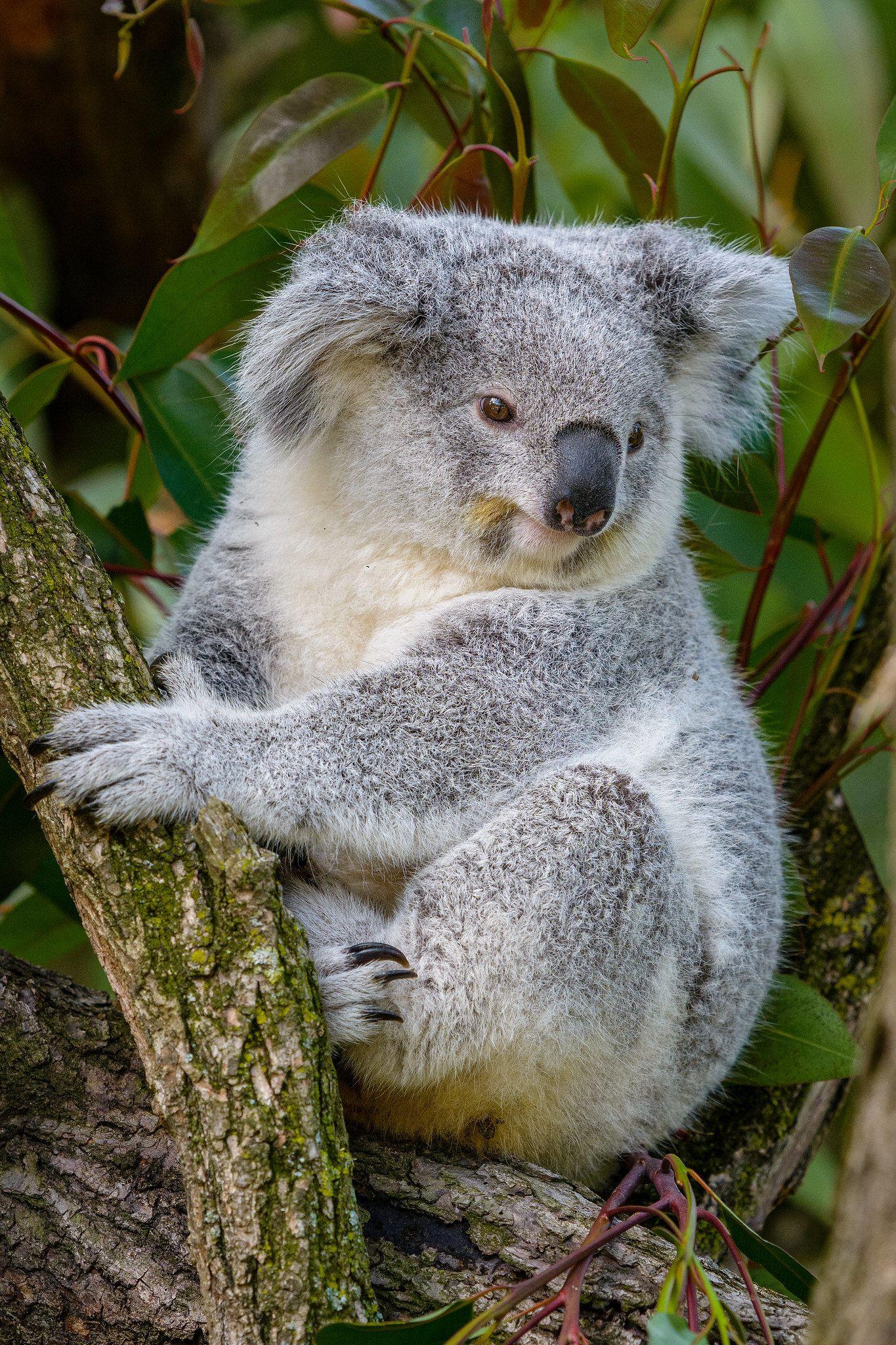 Animals Bear photos, Animals, Zoo animals