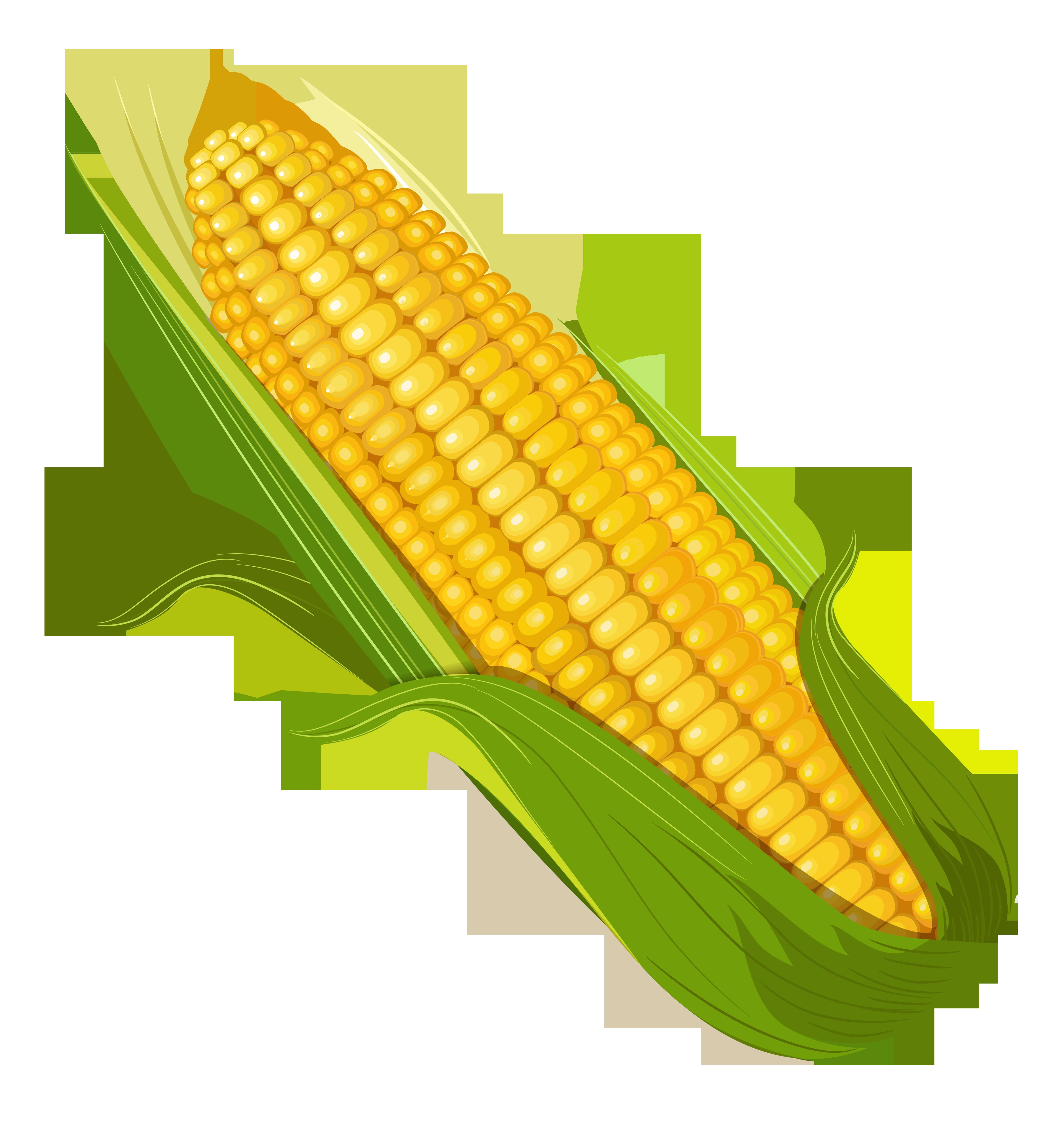 0 d9f87 59264cb8 orig  4664 u00d75000  owoce pinterest vegetable clip art black and white vegetables clip art free