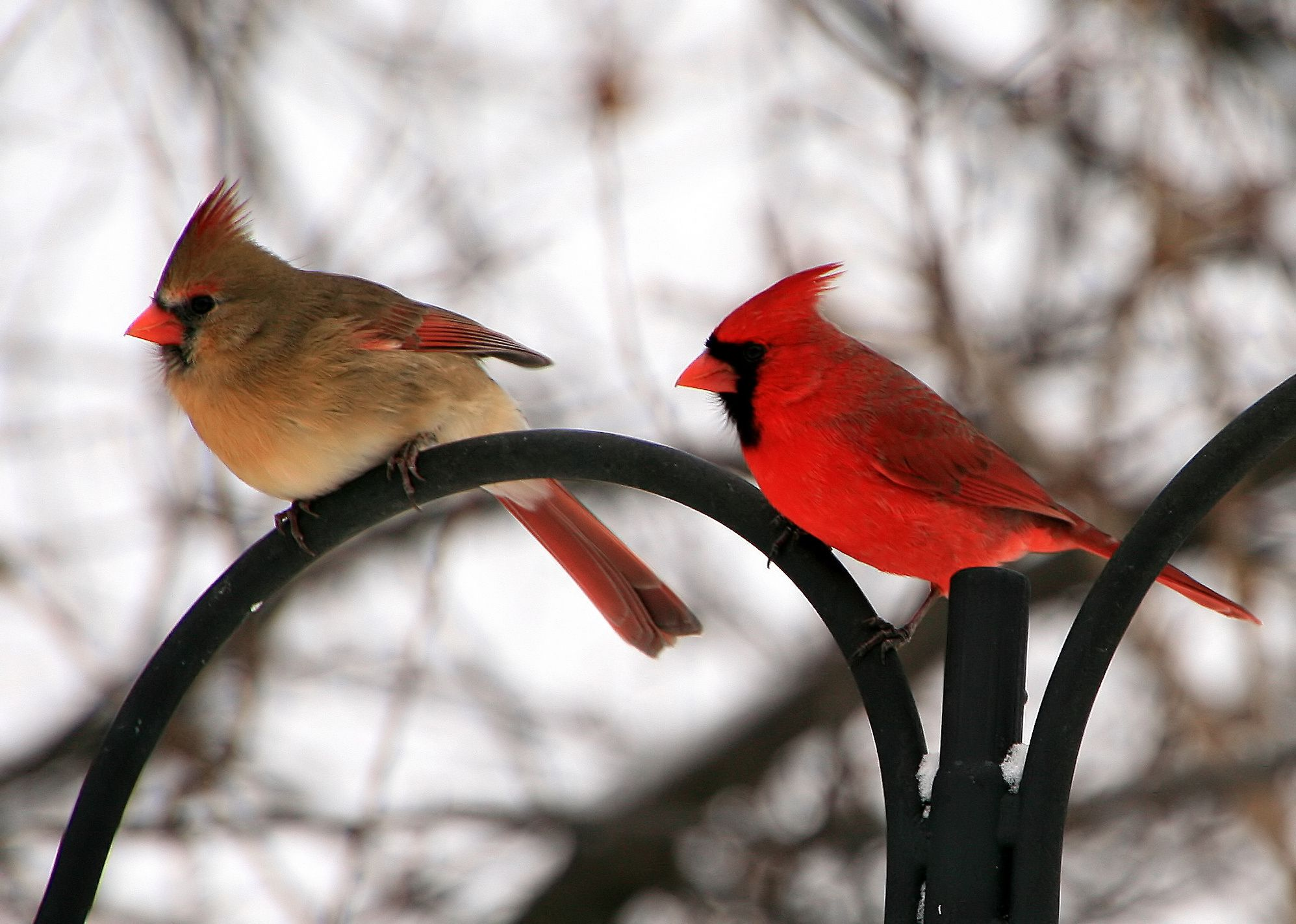 Research News Gender Gap At Our Feeders