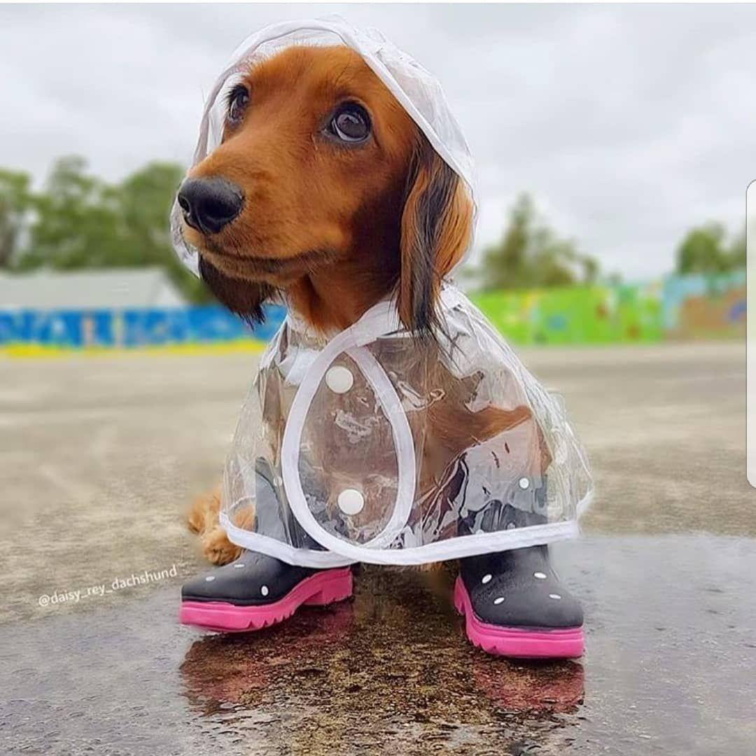 Super cute clear dog raincoat jacket. Sizes XSXXXL. Cheap