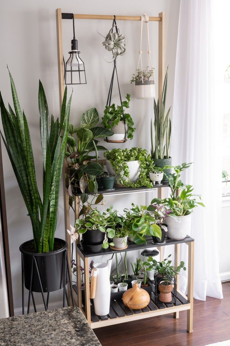 DIY Tiered Plant Stand: Easily Fit More Plants Wit