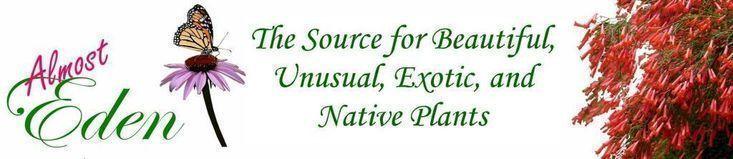 Living Wall Indoor Vertical Gardens Kitchen Herbs ; Gardens Herbs