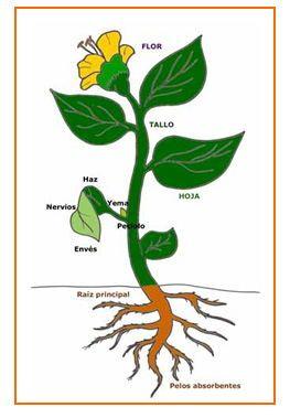 Plantas partes de la planta pinterest for Estructuras para viveros plantas