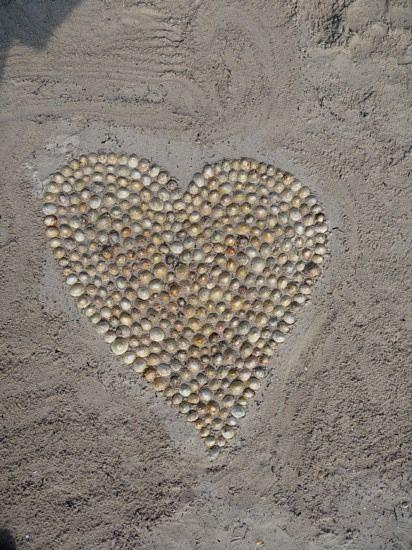 Shells On The Beach Am Strand Herz Liebe Herz Und Muscheln