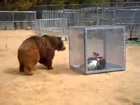 Esta es la nueva atracción japonesa: Enjaularse y esperar al oso