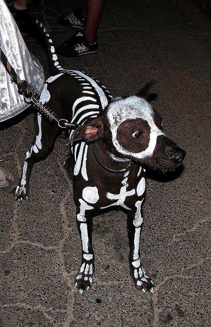 Perro peruano disfrazado de esqueleto