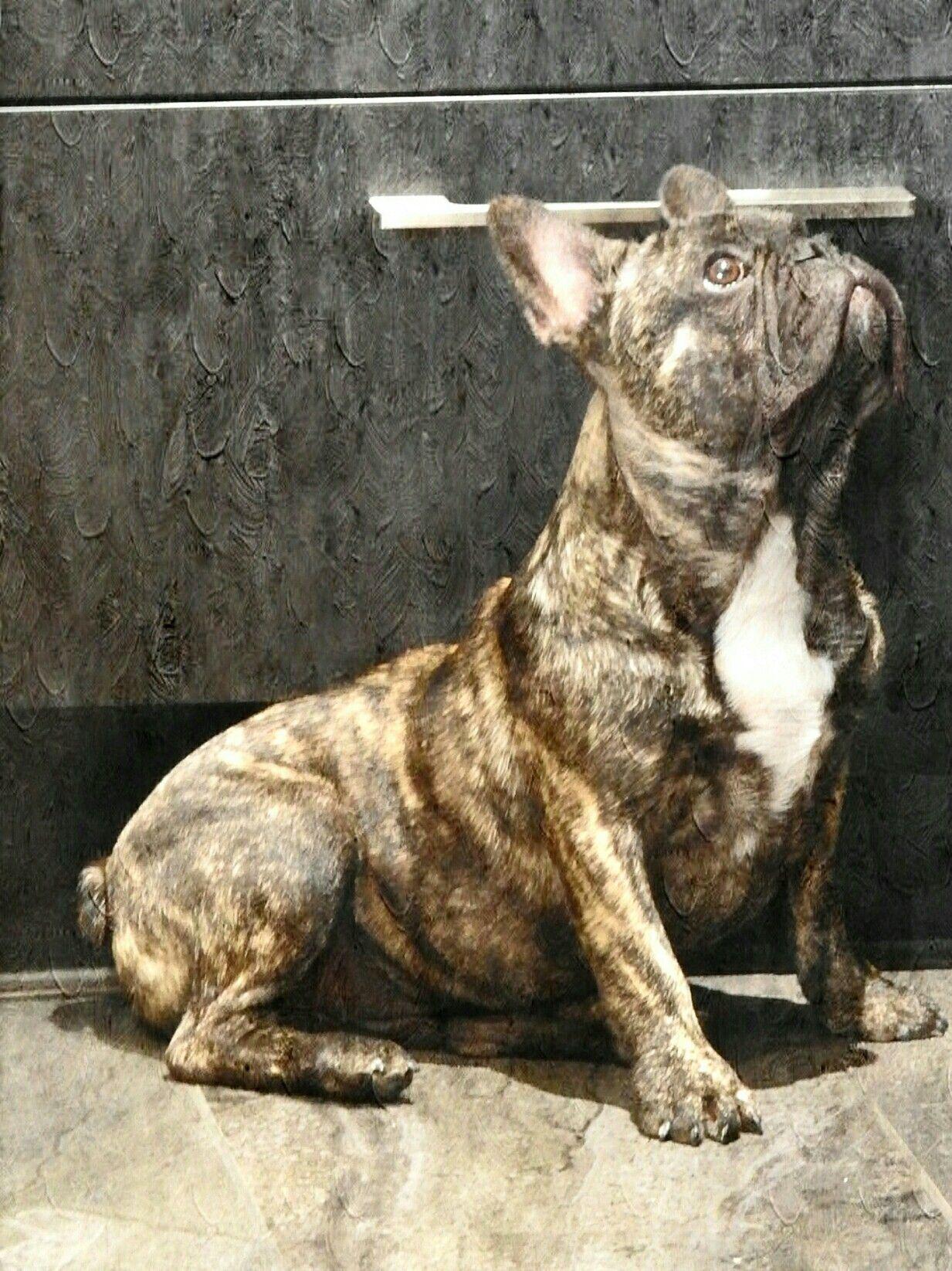Reverse brindle French Bulldog Reuben. Photo by Gaeleen