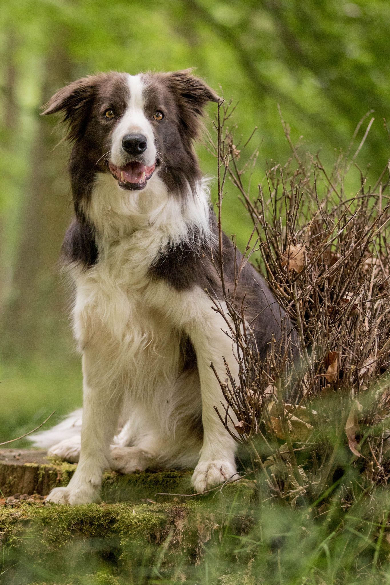Click Visit Site And Check Out Cool Border Collie T Shirts This