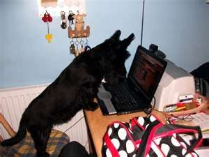 Surfing the web . . . if only they had thumbs.