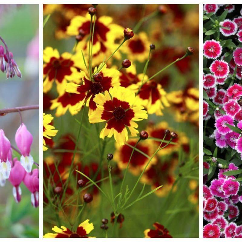The 10 best perennial flowers for any yard perennials yards and the 10 best perennial flowers for any yard mightylinksfo