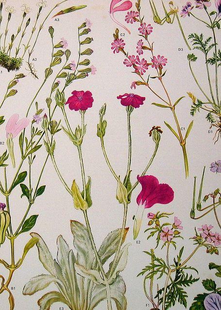 Vintage Botanical Prints Flowers In 2020 Botanical Drawings