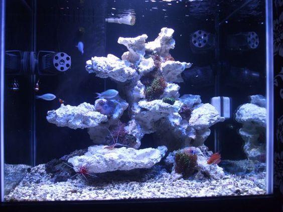 Rockscape Reef Tank Aquascaping Saltwater Fish Tanks Saltwater