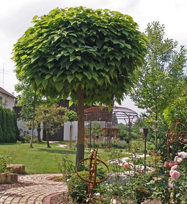 trompetenbaum g rten pinterest trompetenbaum garten und baum. Black Bedroom Furniture Sets. Home Design Ideas