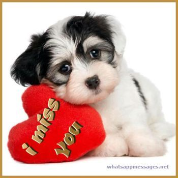 I Miss You Whatsapp Dp Images And Pictures Puppy Valentines