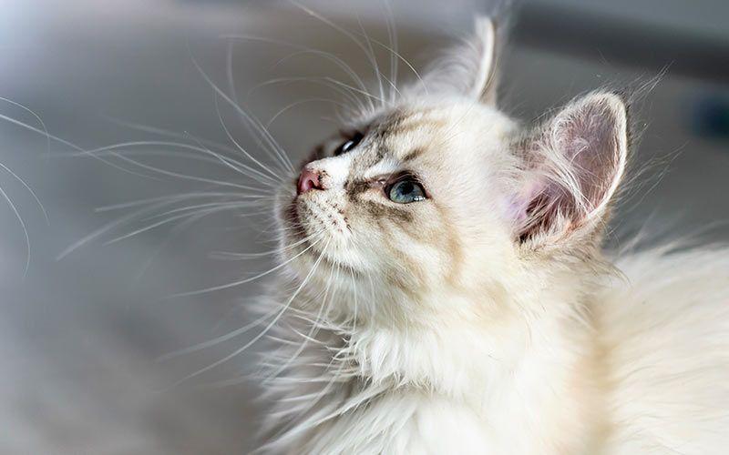 Boy Cat Names 250 Great Male Cat Names From Boy Cat Names Cat Site Kitten Names Boy