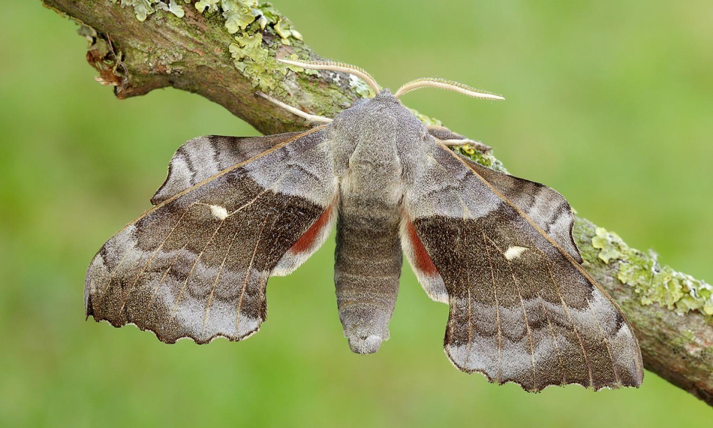 Masthead Image Schmetterling Motte H S